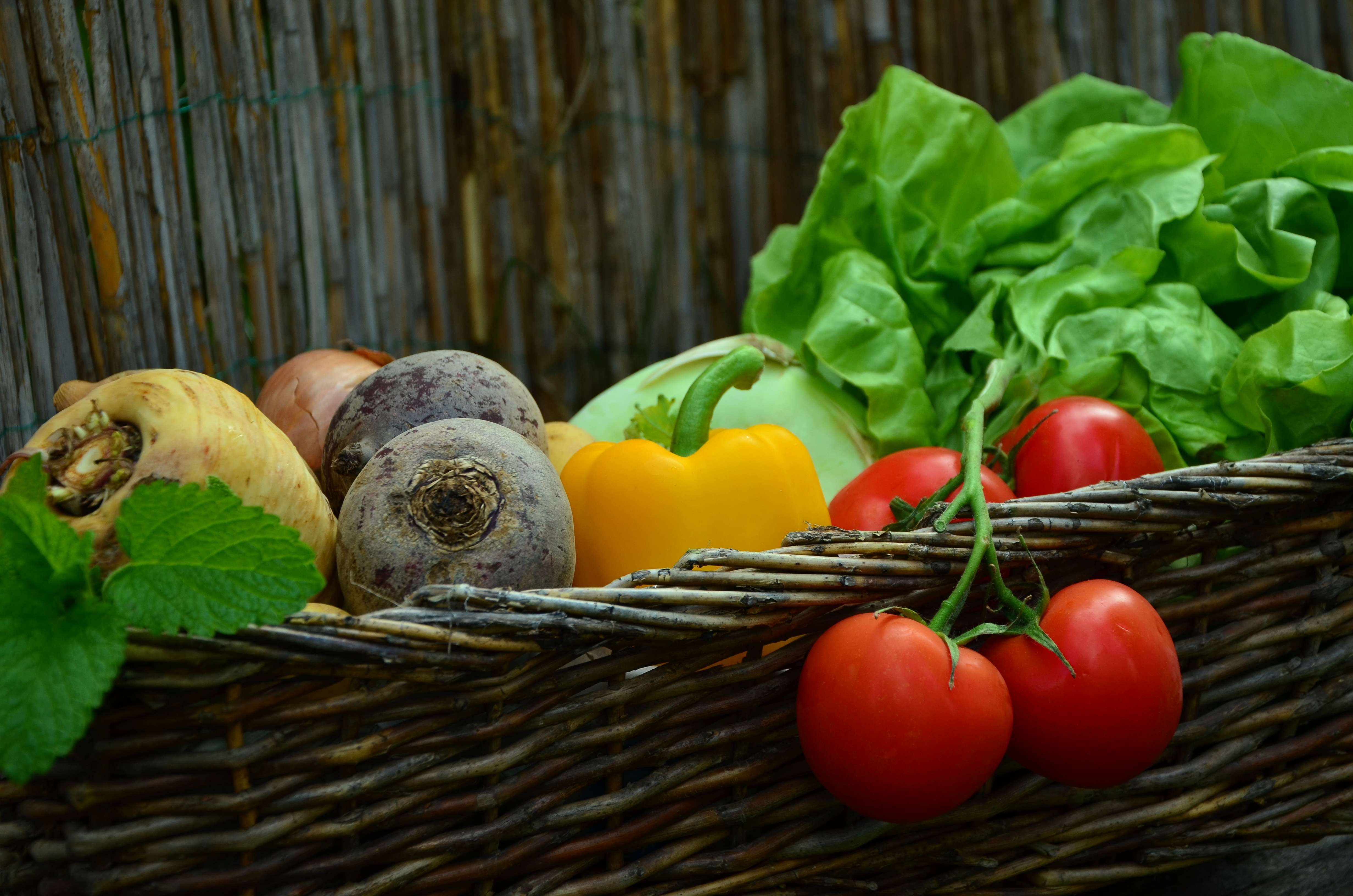 Garden basket with root vegetables, tomatoes, lettuce, etc.